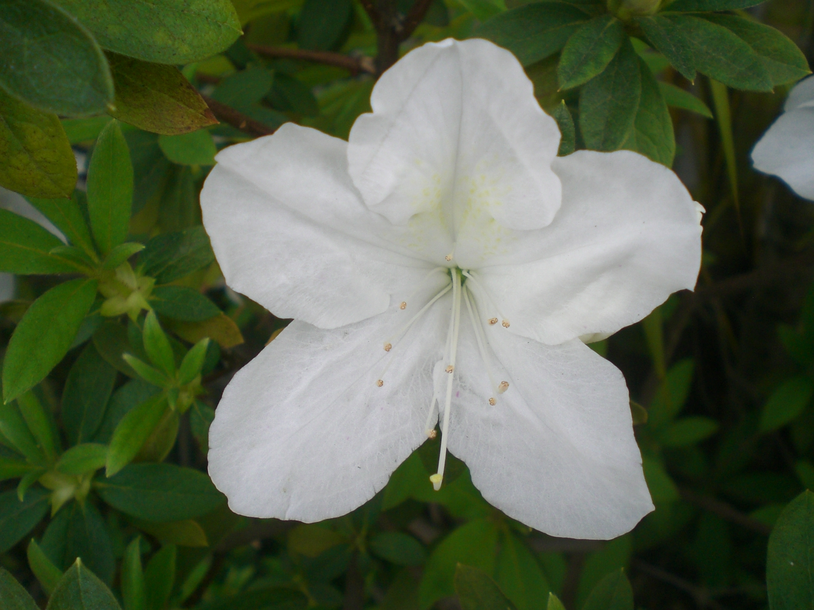 Names Of White Flowers 24 Cool Wallpaper