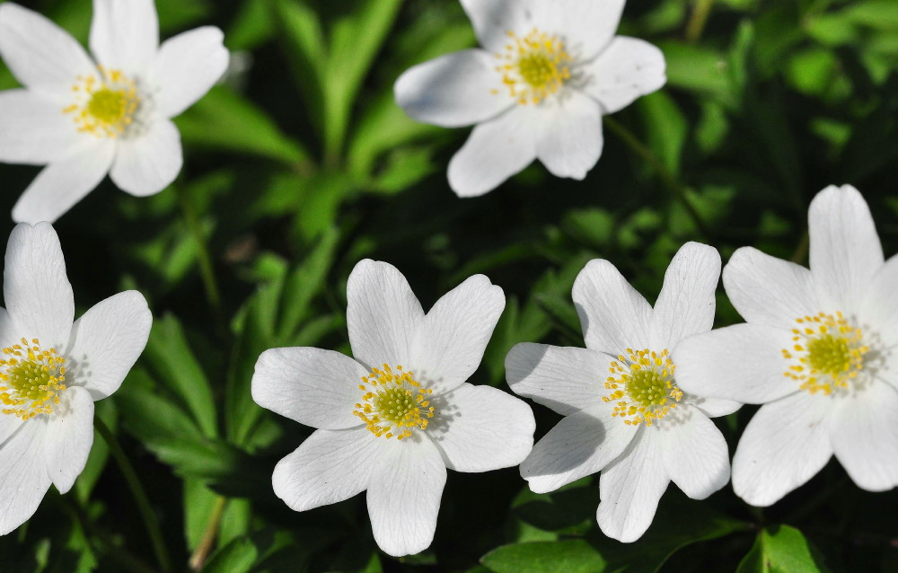 Names of white flowers 29 cool wallpaper hdflowerwallpaper names of white flowers background mightylinksfo