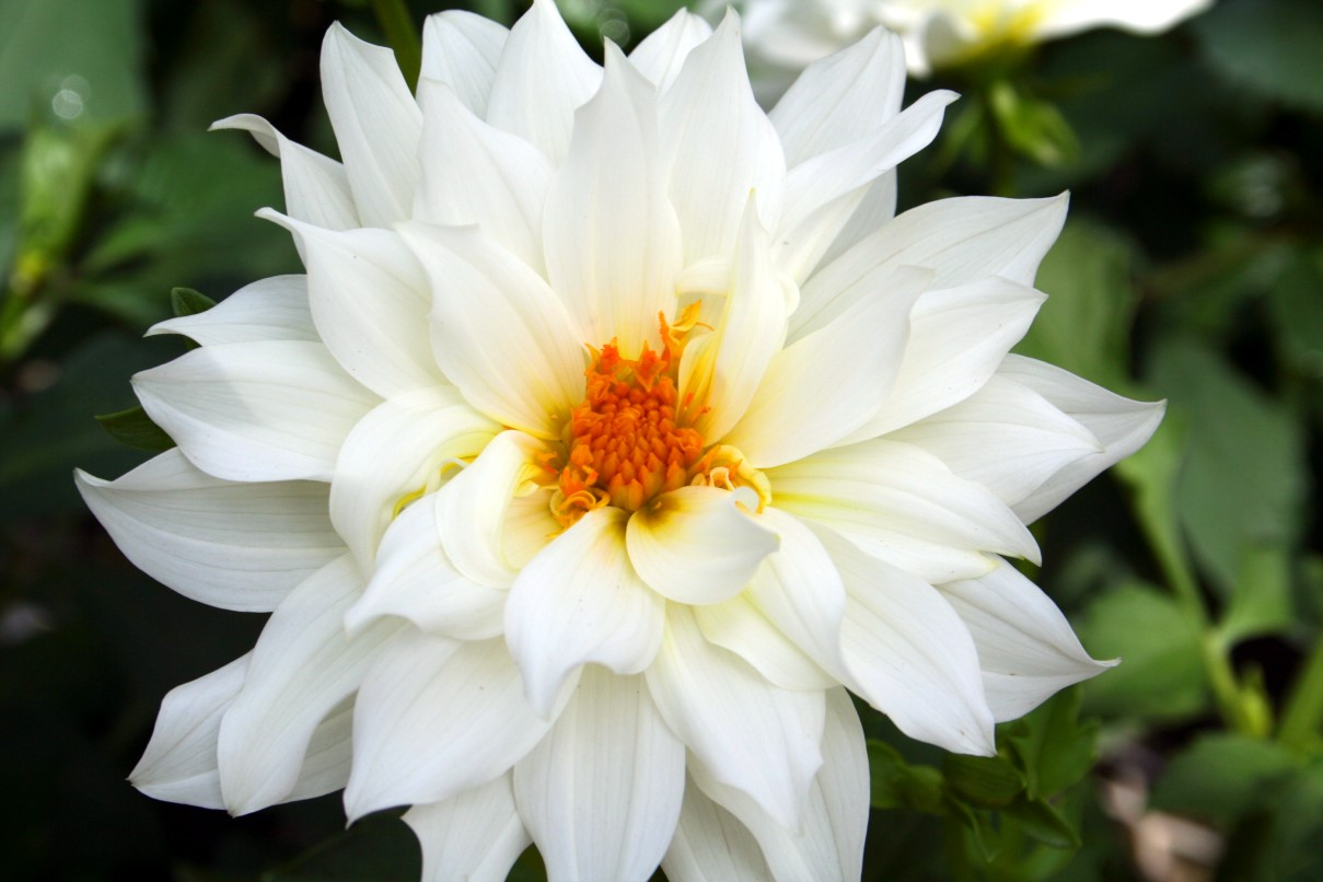 Names Of White Flowers 30 Hd Wallpaper Hdflowerwallpaper