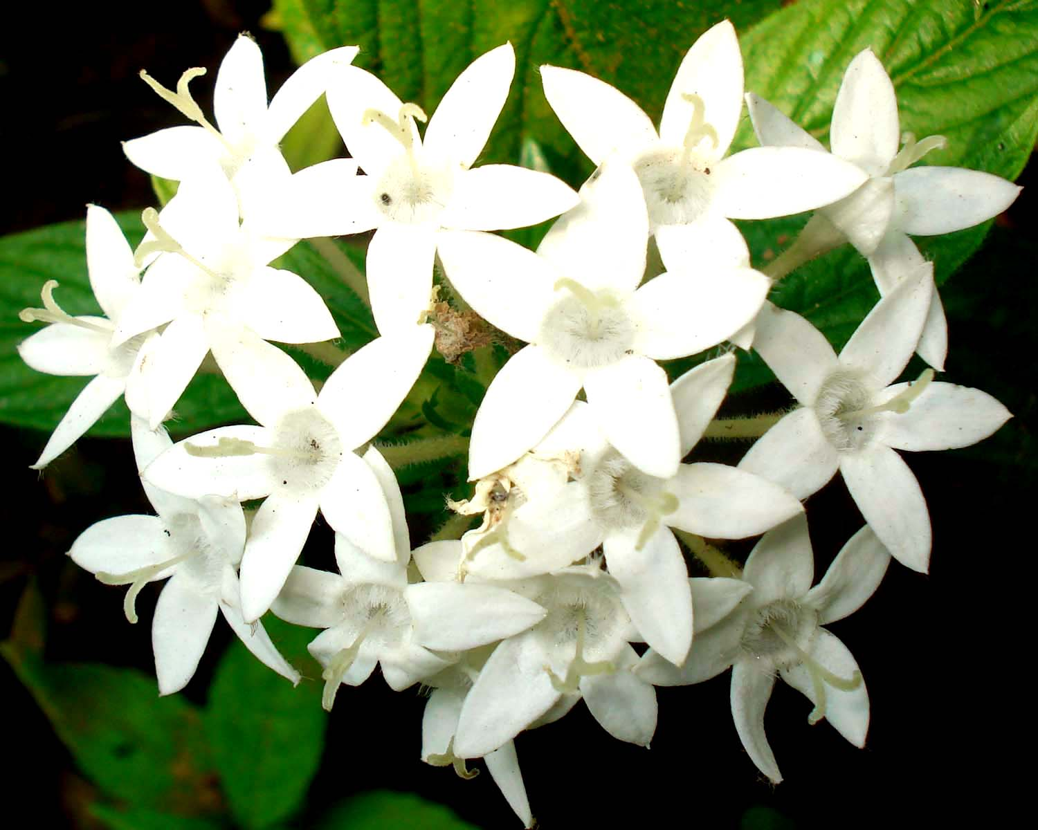 Names Of White Flowers Free Wallpaper