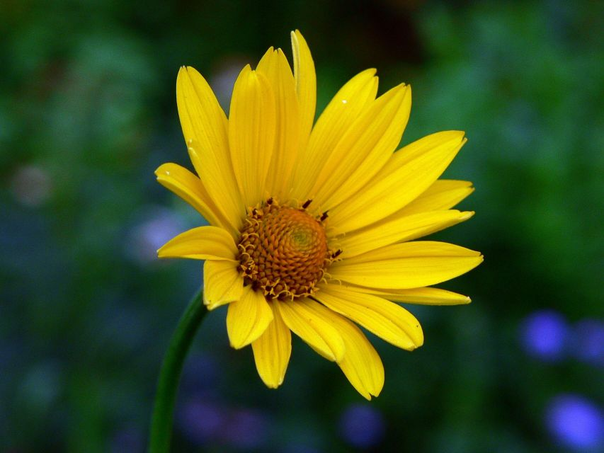Names Of Yellow Flowers 20 Widescreen Wallpaper