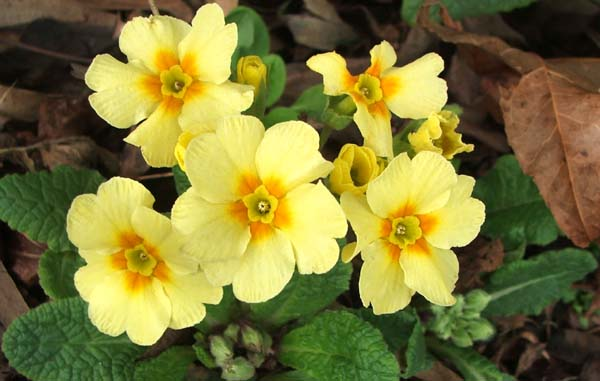 Names Of Yellow Flowers 22 Background Wallpaper