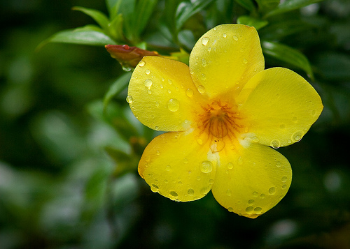 Names Of Yellow Flowers 24 High Resolution Wallpaper