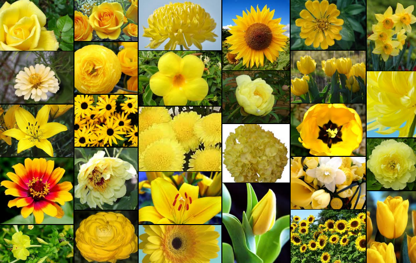 Names of yellow flowers 27 free wallpaper hdflowerwallpaper names of yellow flowers hd wallpaper mightylinksfo Image collections