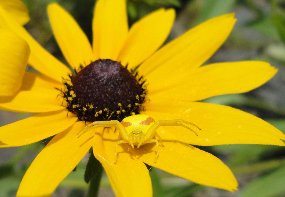 Names of yellow flowers 30 cool hd wallpaper hdflowerwallpaper names of yellow flowers hd wallpaper mightylinksfo