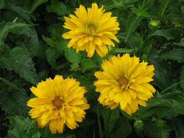Names of yellow flowers 6 free wallpaper hdflowerwallpaper names of yellow flowers hd wallpaper mightylinksfo