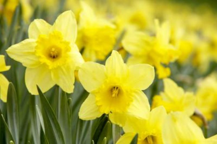 Names Of Yellow Flowers 7 Cool Wallpaper