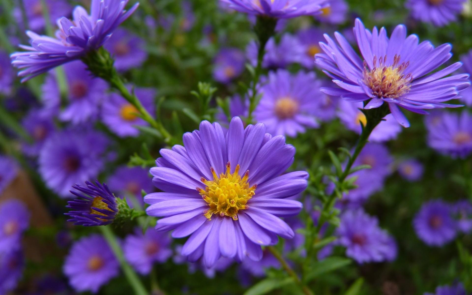 Photos Of Purple Flowers 14 Hd Wallpaper