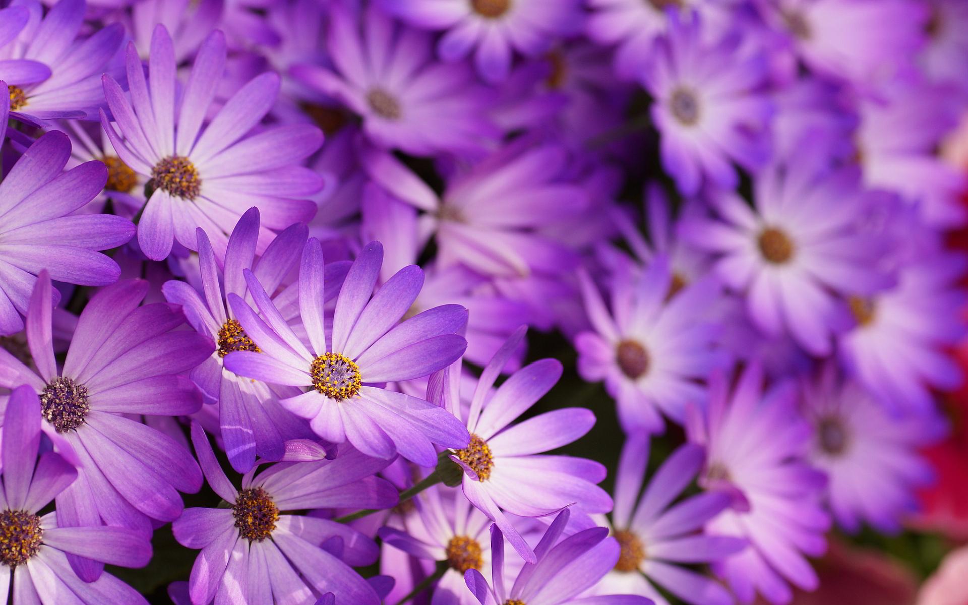 Photos Of Purple Flowers 23 Free Hd Wallpaper
