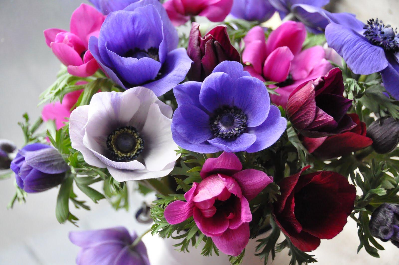Photos Of Purple Flowers 30 Cool Hd Wallpaper