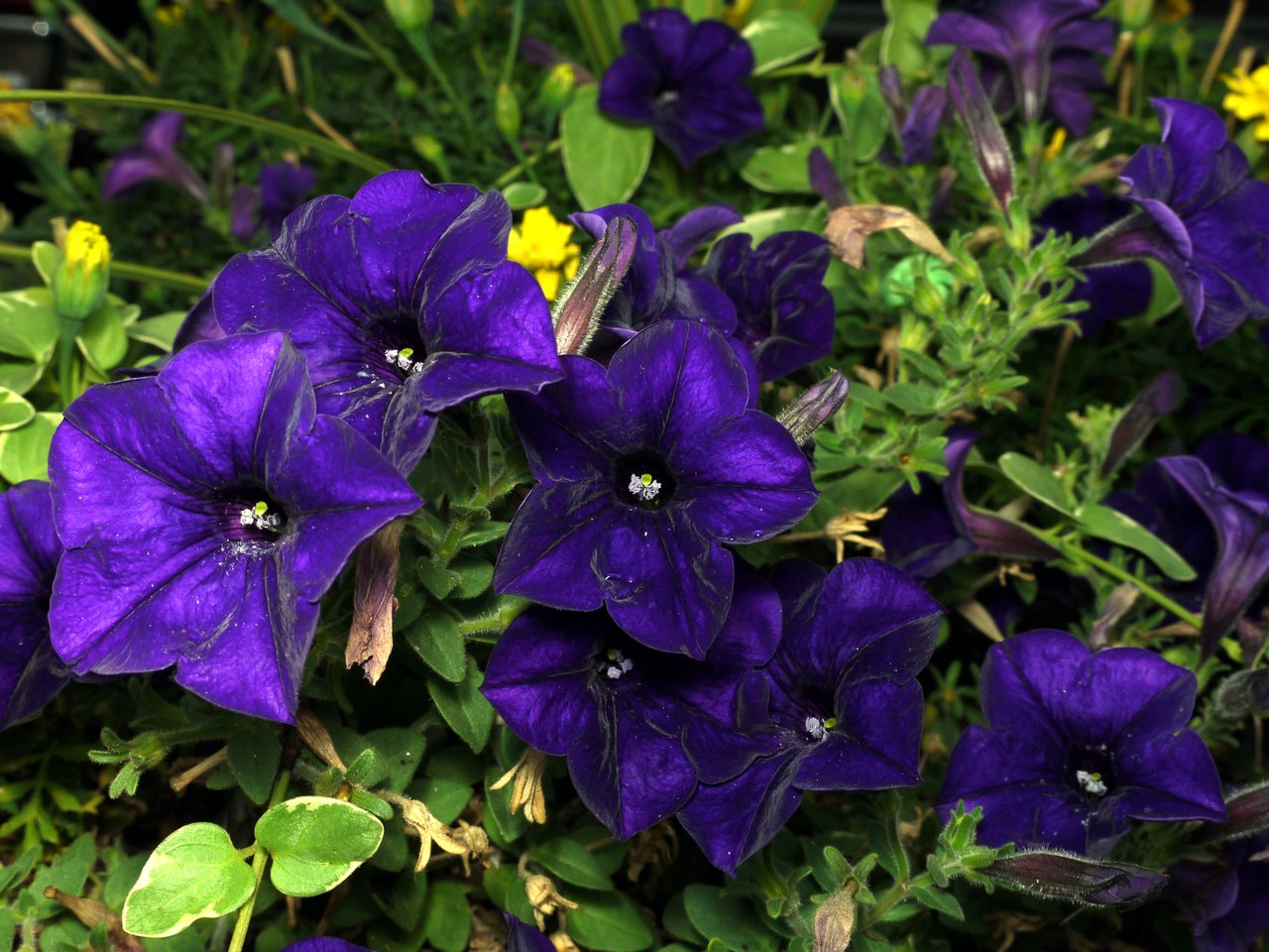 Photos Of Purple Flowers 6 Background