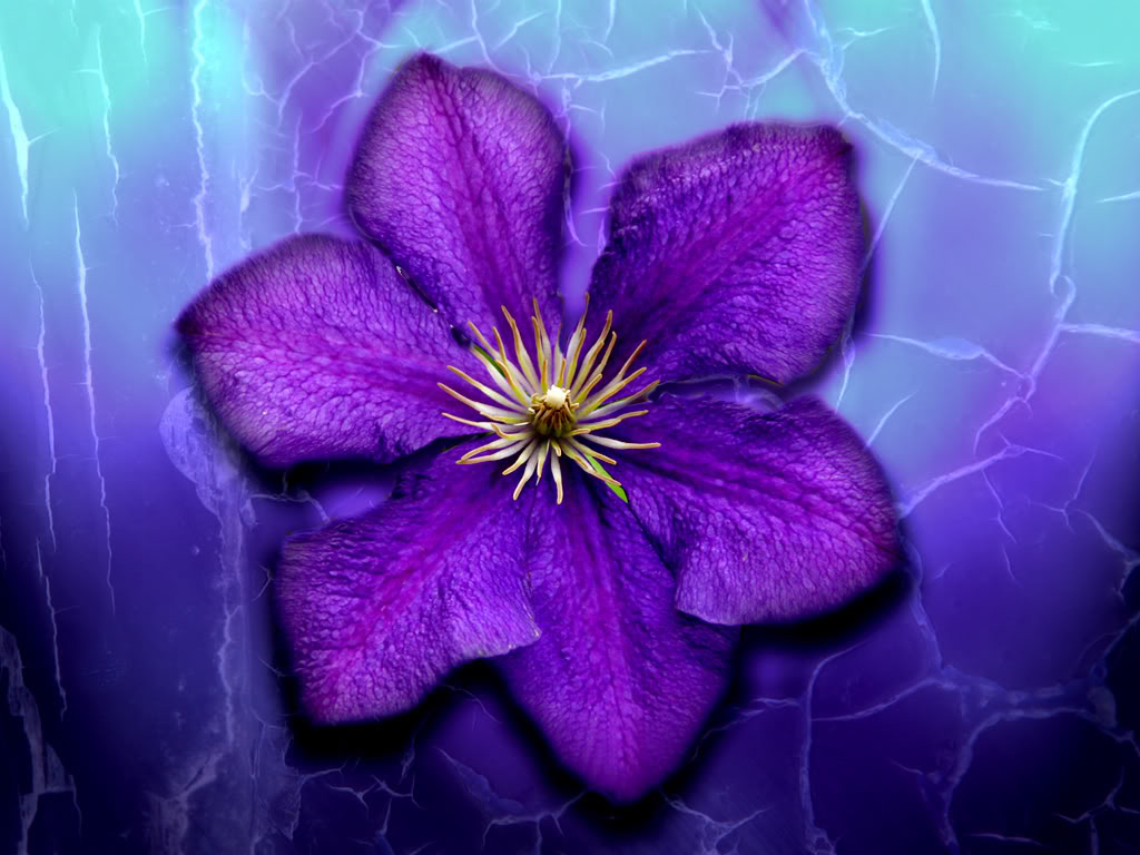 photos of purple flowers desktop wallpapers  hdflowerwallpaper, Beautiful flower