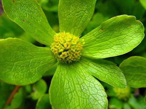 Pictures Of Green Flowers 19 Desktop Wallpaper