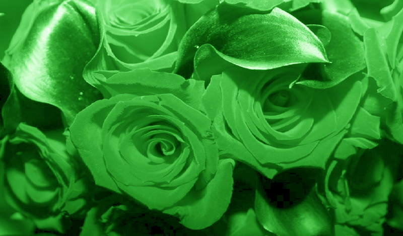 Pictures Of Green Flowers Hd Wallpaper
