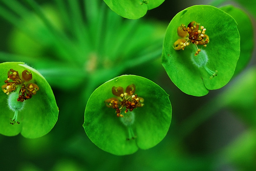 Pictures Of Green Flowers 7 Widescreen Wallpaper