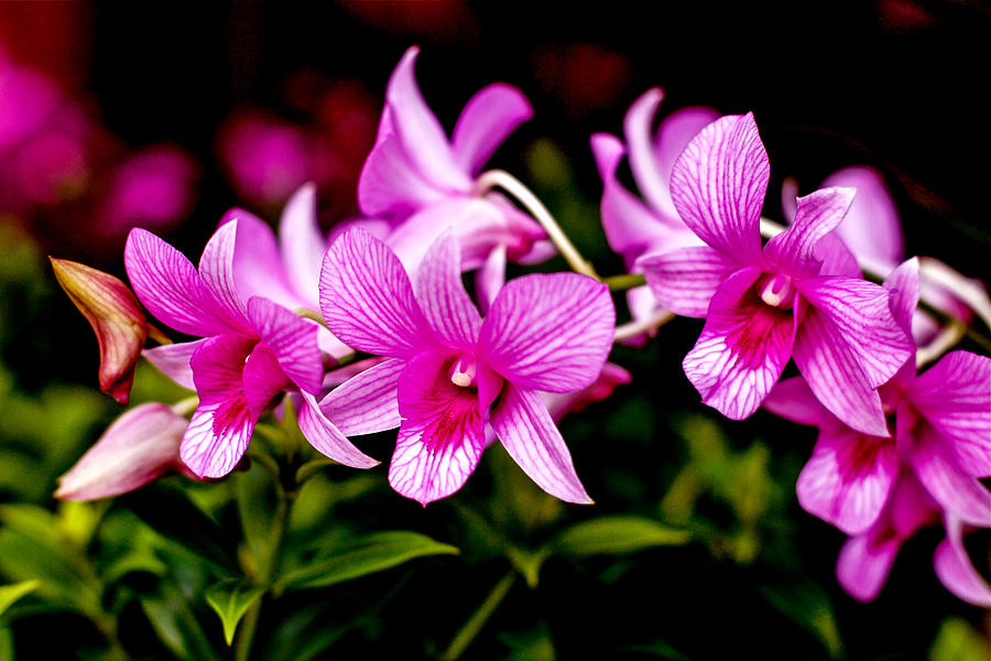 Pink flowers meaning 10 desktop background hdflowerwallpaper pink flowers meaning hd wallpaper mightylinksfo