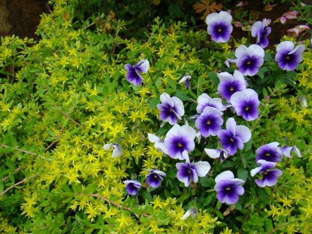 Purple Flowers List Widescreen Wallpaper