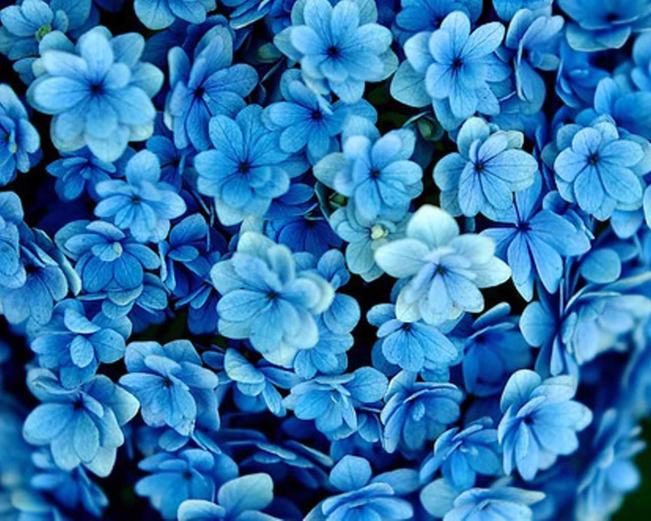 Types Of Black Flowers 24 Widescreen Wallpaper
