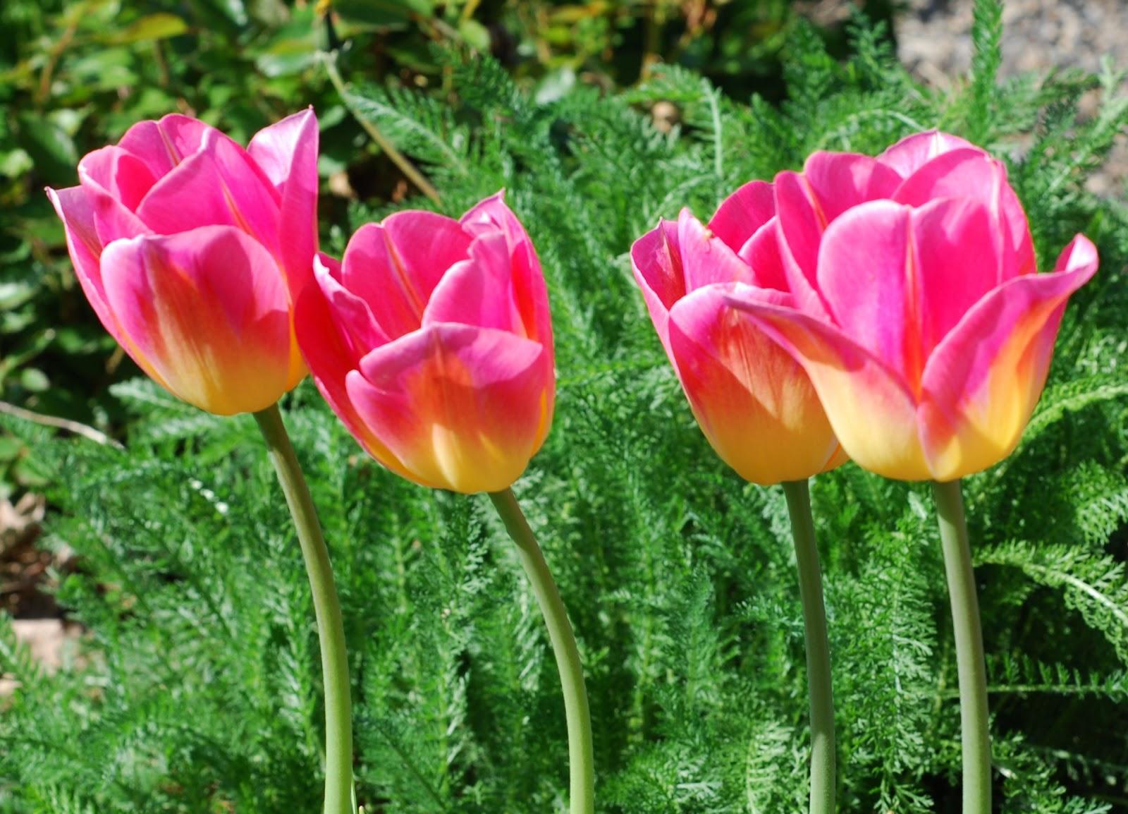 Types Of Pink Flowers 17 Background Hdflowerwallpaper