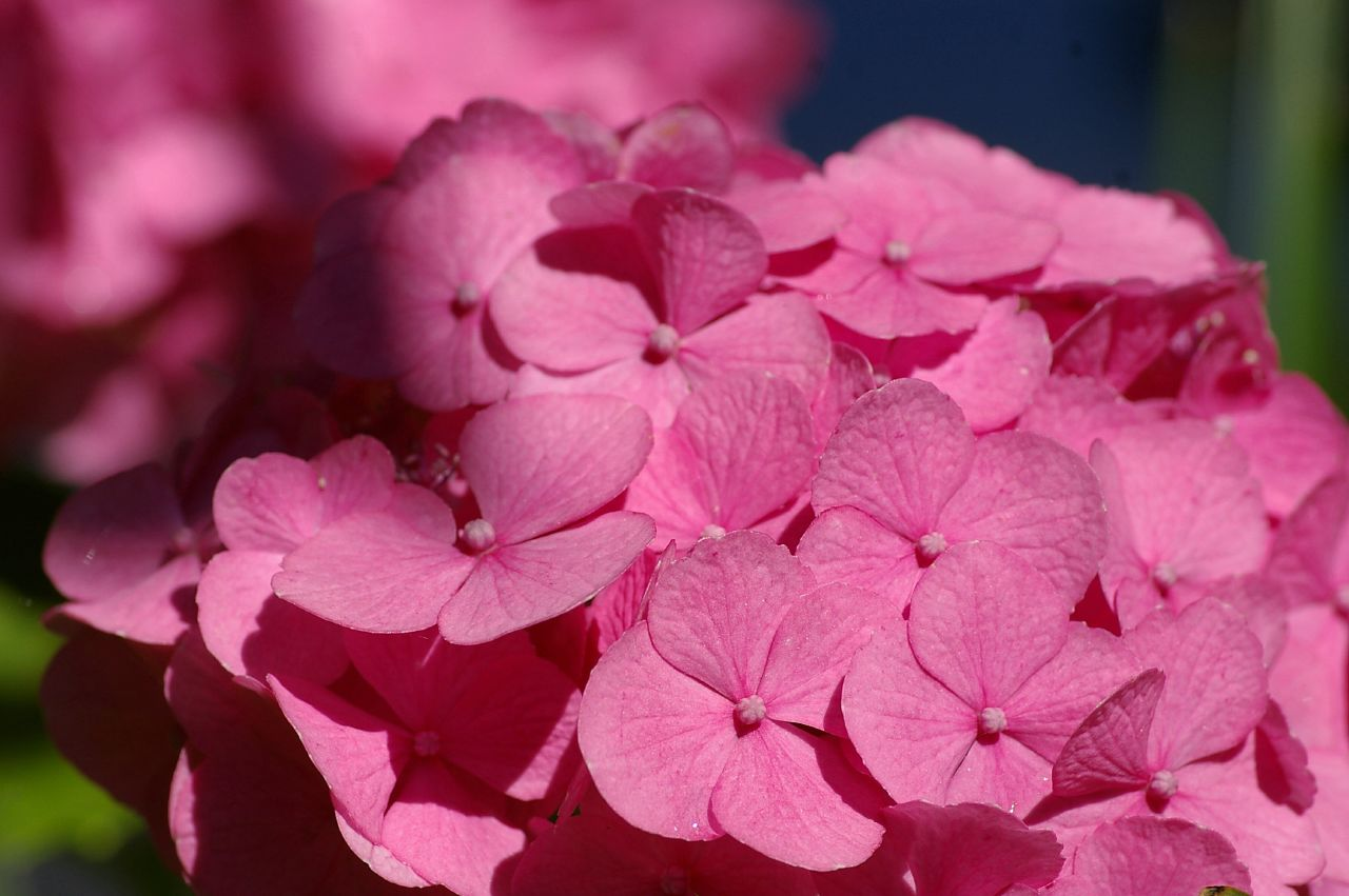 Types Of Pink Flowers 2 Background