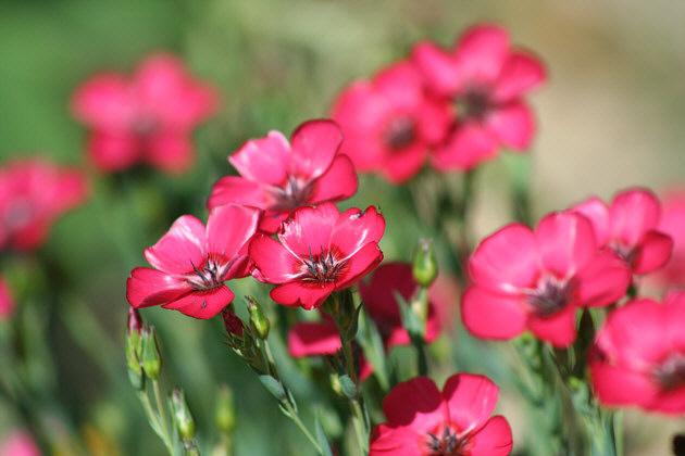 Types Of Pink Flowers 26 Desktop Background
