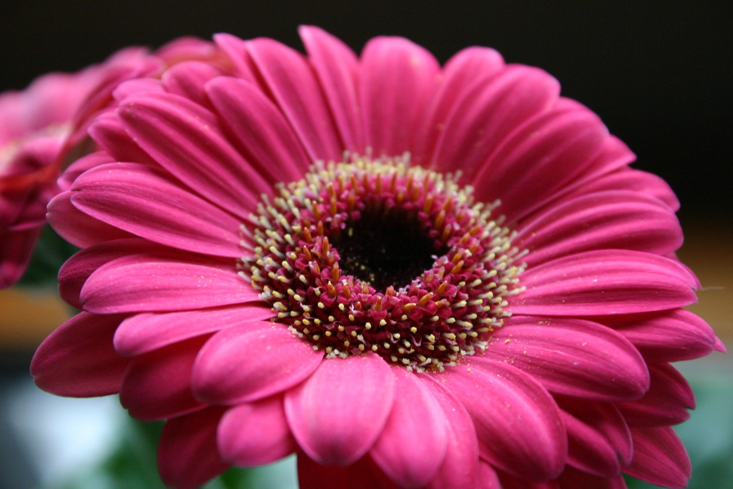 Types Of Pink Flowers 29 Cool Hd Wallpaper