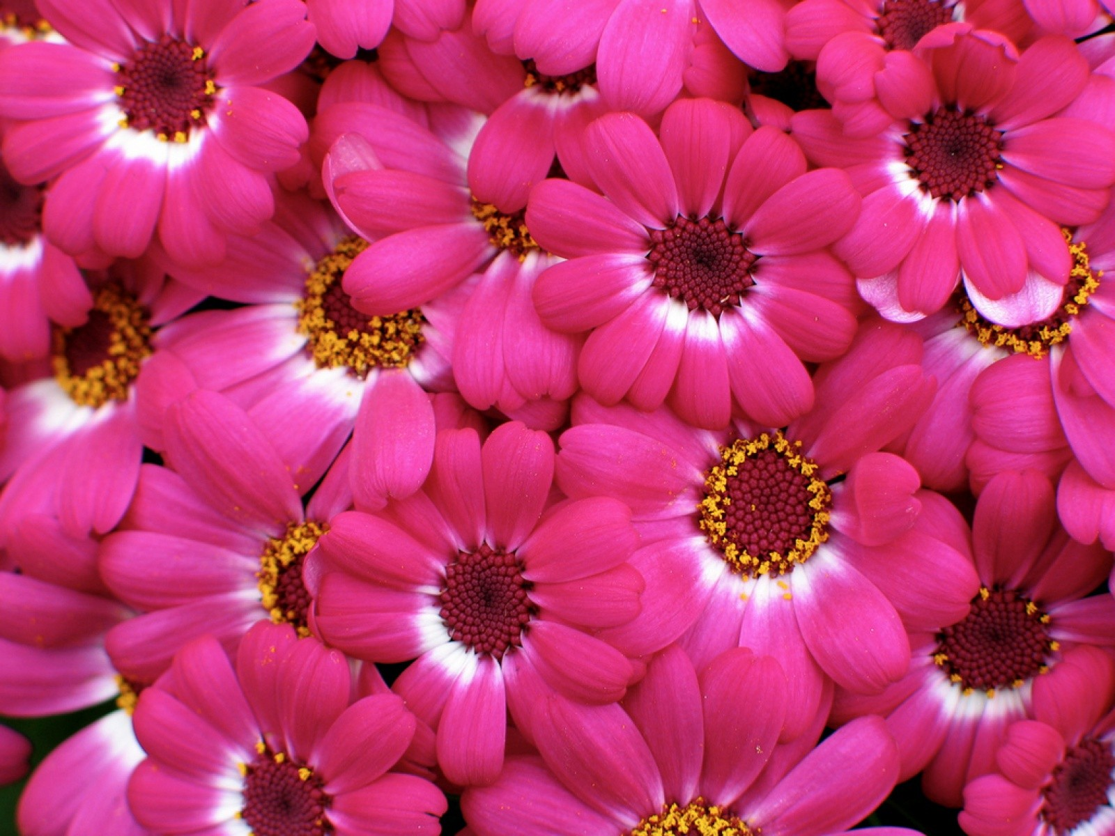 Types of pink flowers 7 widescreen wallpaper hdflowerwallpaper types of pink flowers hd wallpaper mightylinksfo