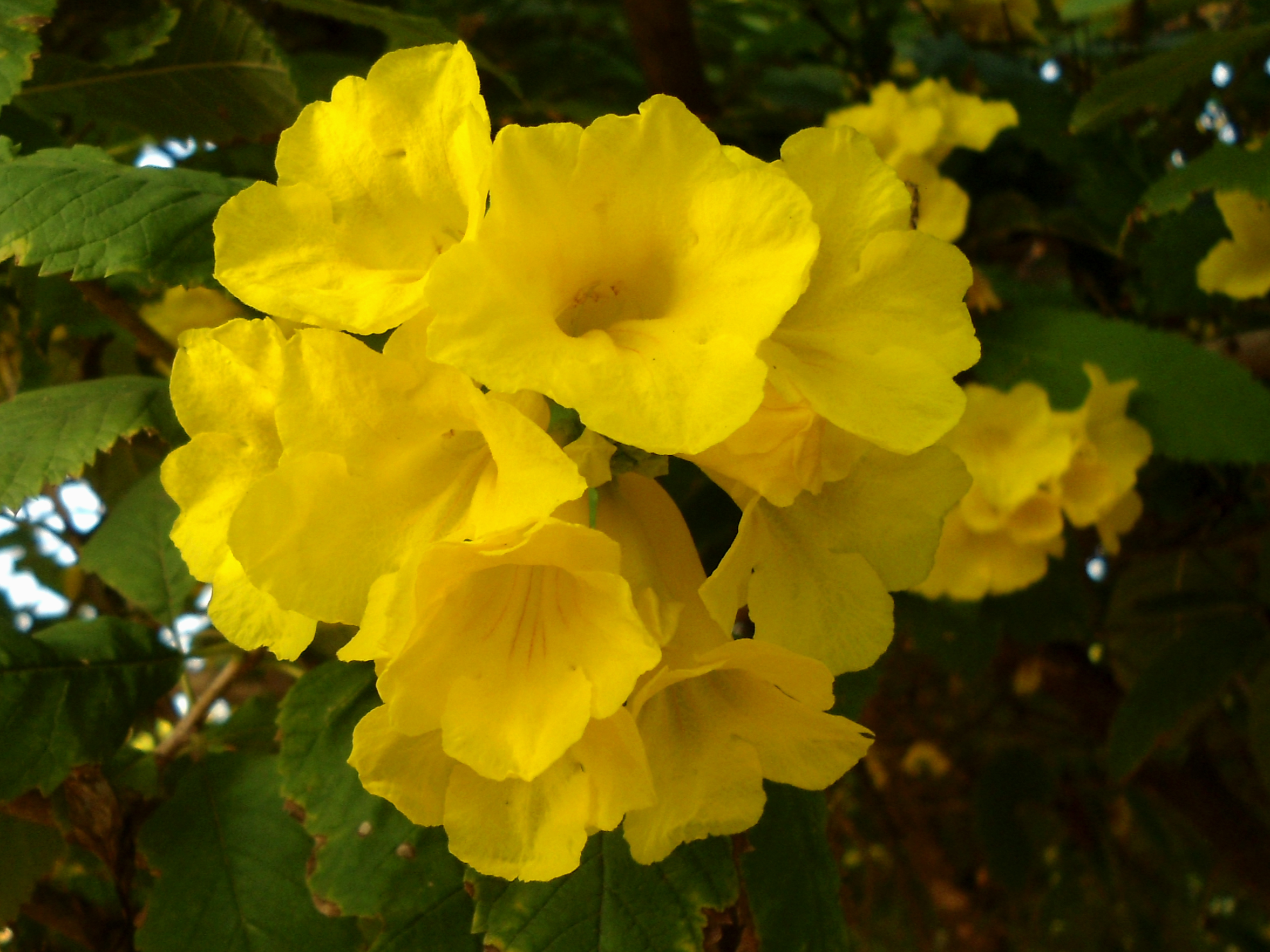 Types of yellow flowers 5 hd wallpaper hdflowerwallpaper types of yellow flowers hd wallpaper mightylinksfo