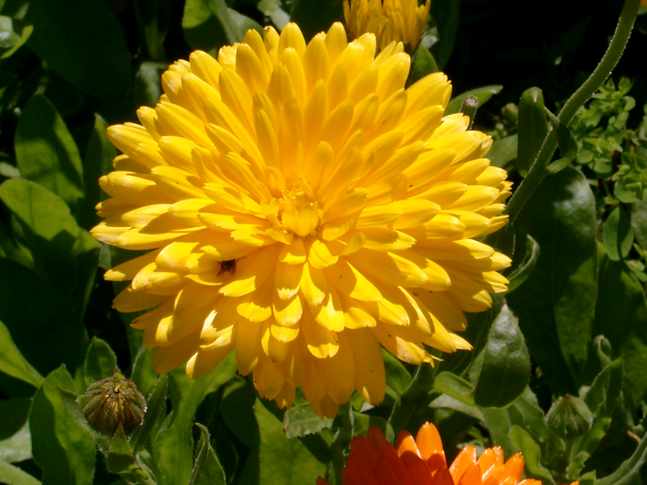 Types of yellow flowers 9 wide wallpaper hdflowerwallpaper types of yellow flowers hd wallpaper mightylinksfo
