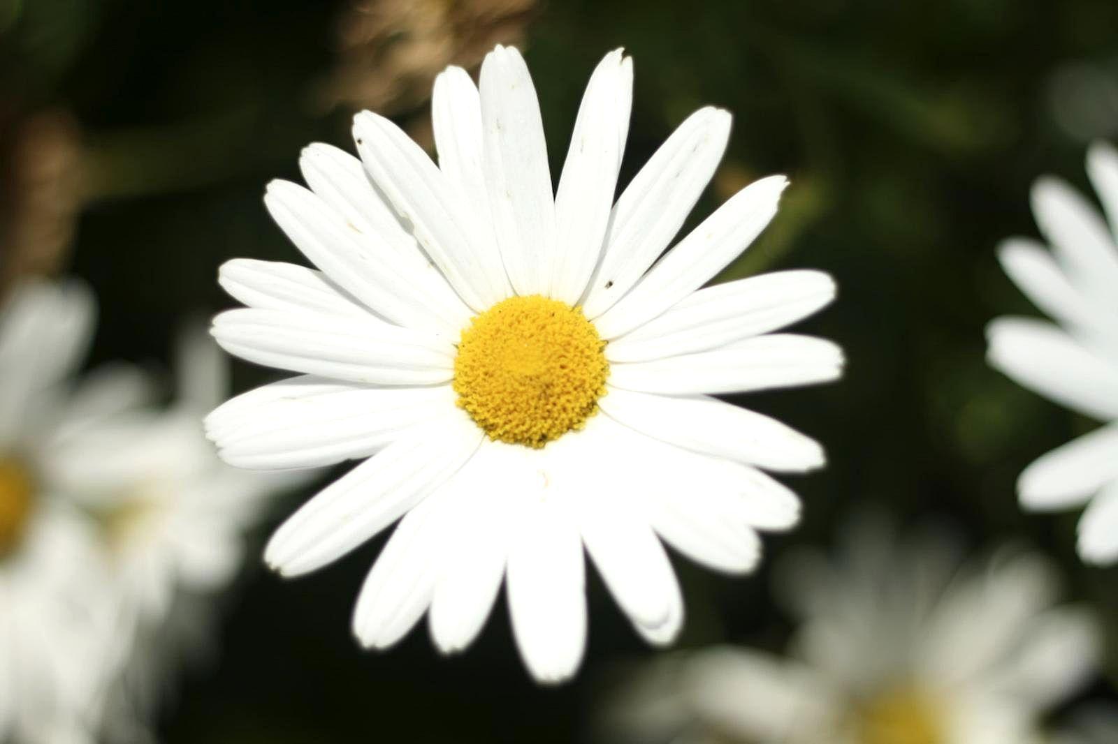 Beautiful white flower embrocation liniment gift images for white flower embrocation liniment gallery flower decoration ideas mightylinksfo