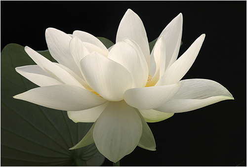 White flowers pics savingourboysfo white flower image wallpaper hd beautiful flower mightylinksfo