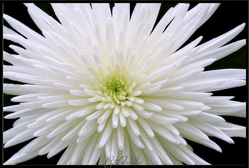 White flowers meaning 27 cool wallpaper hdflowerwallpaper white flowers meaning free wallpaper mightylinksfo Images