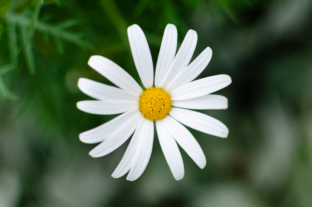 White Flowers Names 4 Desktop Background Hdflowerwallpaper