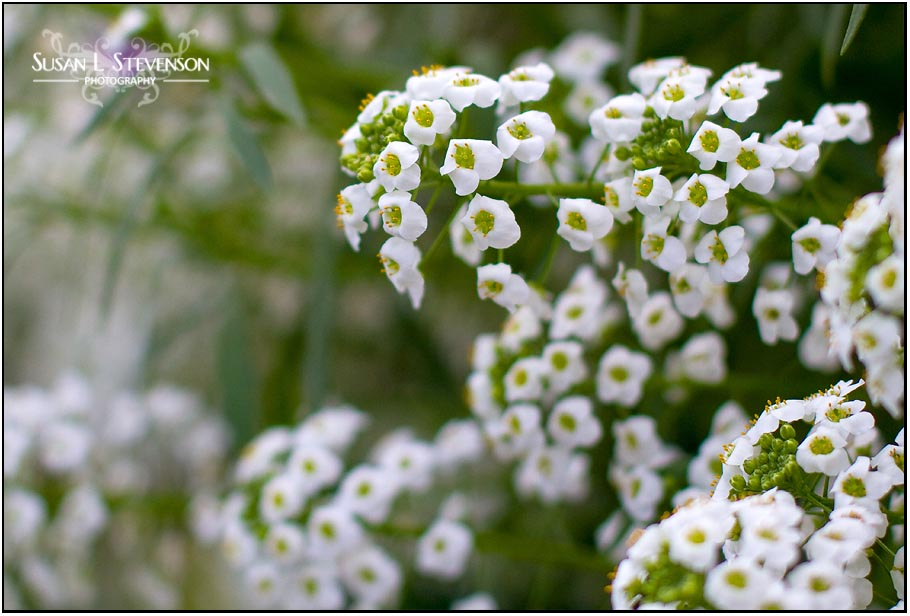Names Of White Flowers