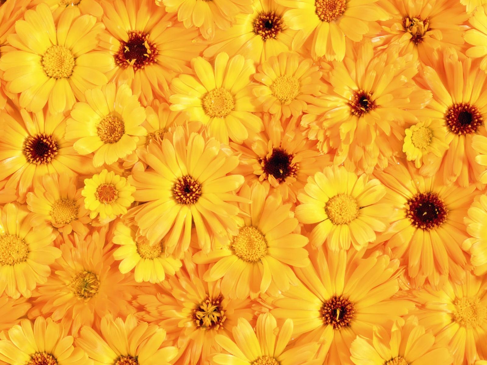 Yellow Flowers 120 High Resolution Wallpaper Hdflowerwallpaper