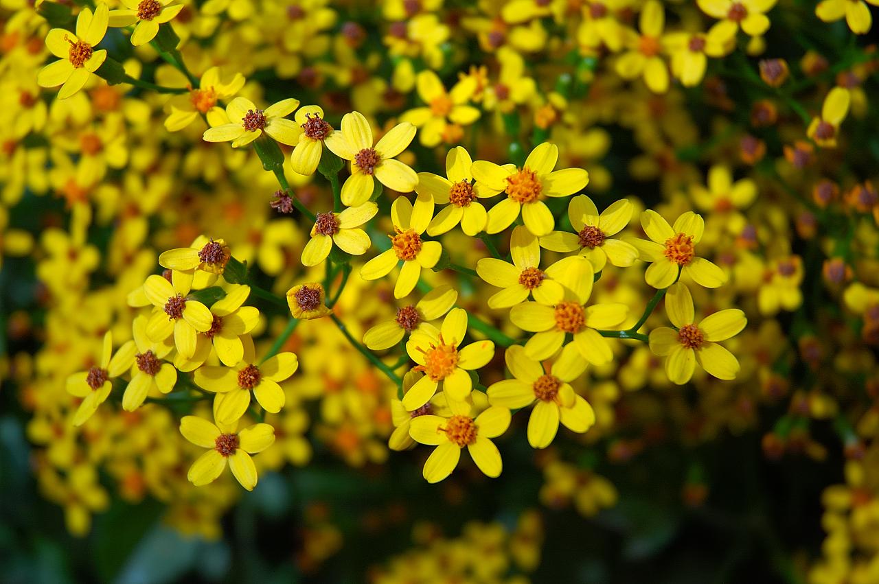 Yellow Flowers 183 Background Hdflowerwallpaper