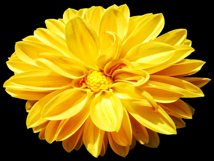 Yellow flowers meaning 7 free wallpaper hdflowerwallpaper yellow flowers meaning hd wallpaper mightylinksfo Gallery