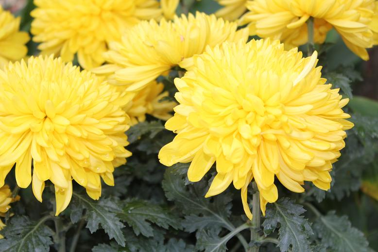 Yellow flowers meaning 9 hd wallpaper hdflowerwallpaper yellow flowers meaning 9 hd wallpaper mightylinksfo