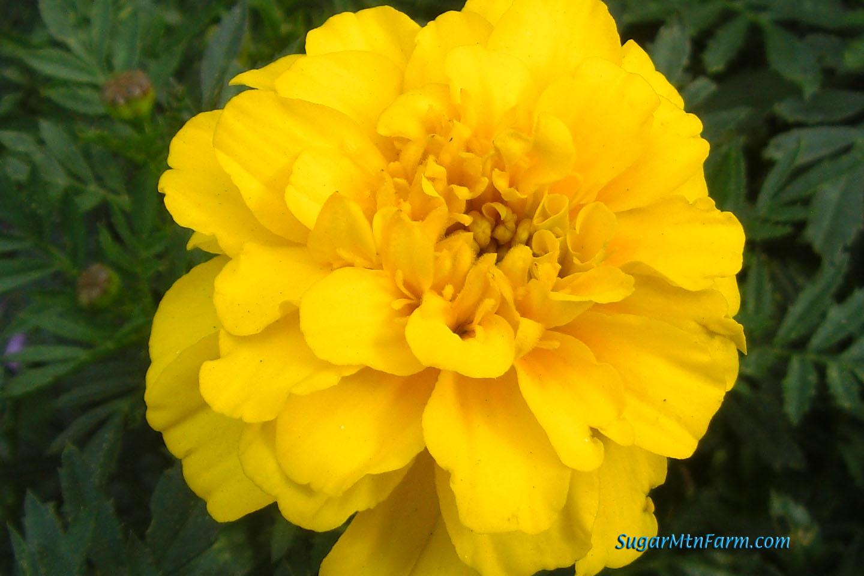 Yellow Flowers Names 12 Widescreen Wallpaper Hdflowerwallpaper