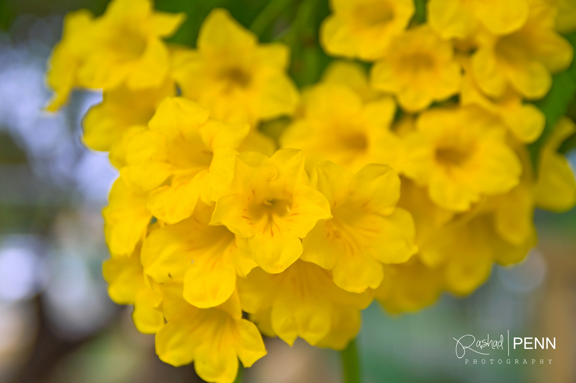 Yellow flowers names 3 cool hd wallpaper hdflowerwallpaper yellow flowers names free wallpaper mightylinksfo Image collections
