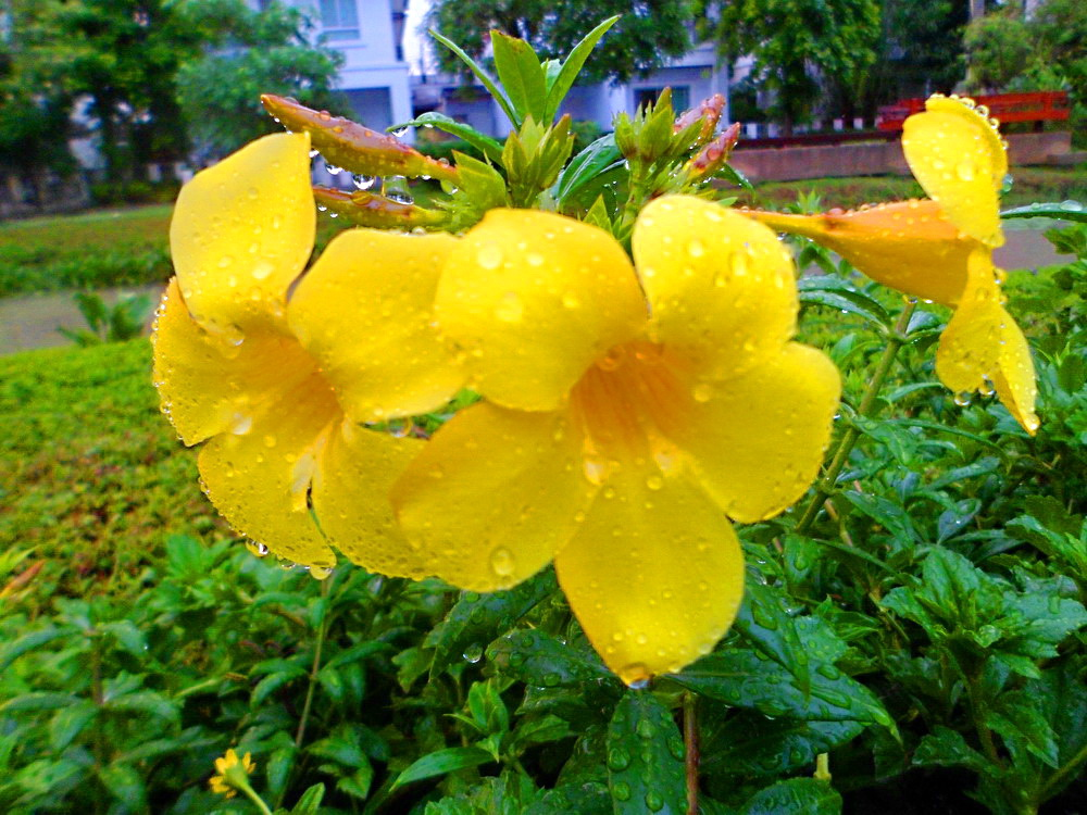 Yellow Flowers Names 5 Free Wallpaper
