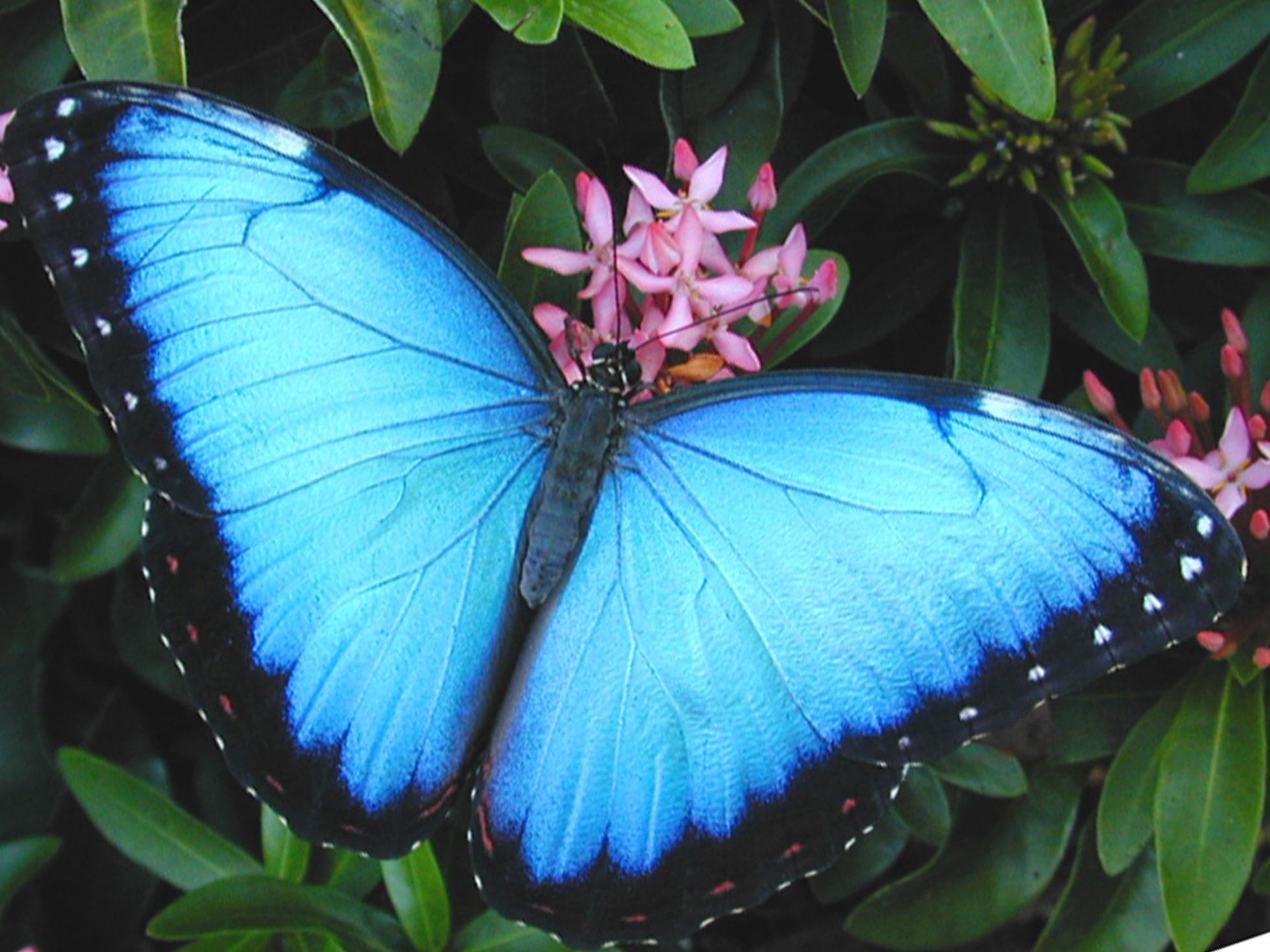 rainforest butterfly wallpaper - photo #11