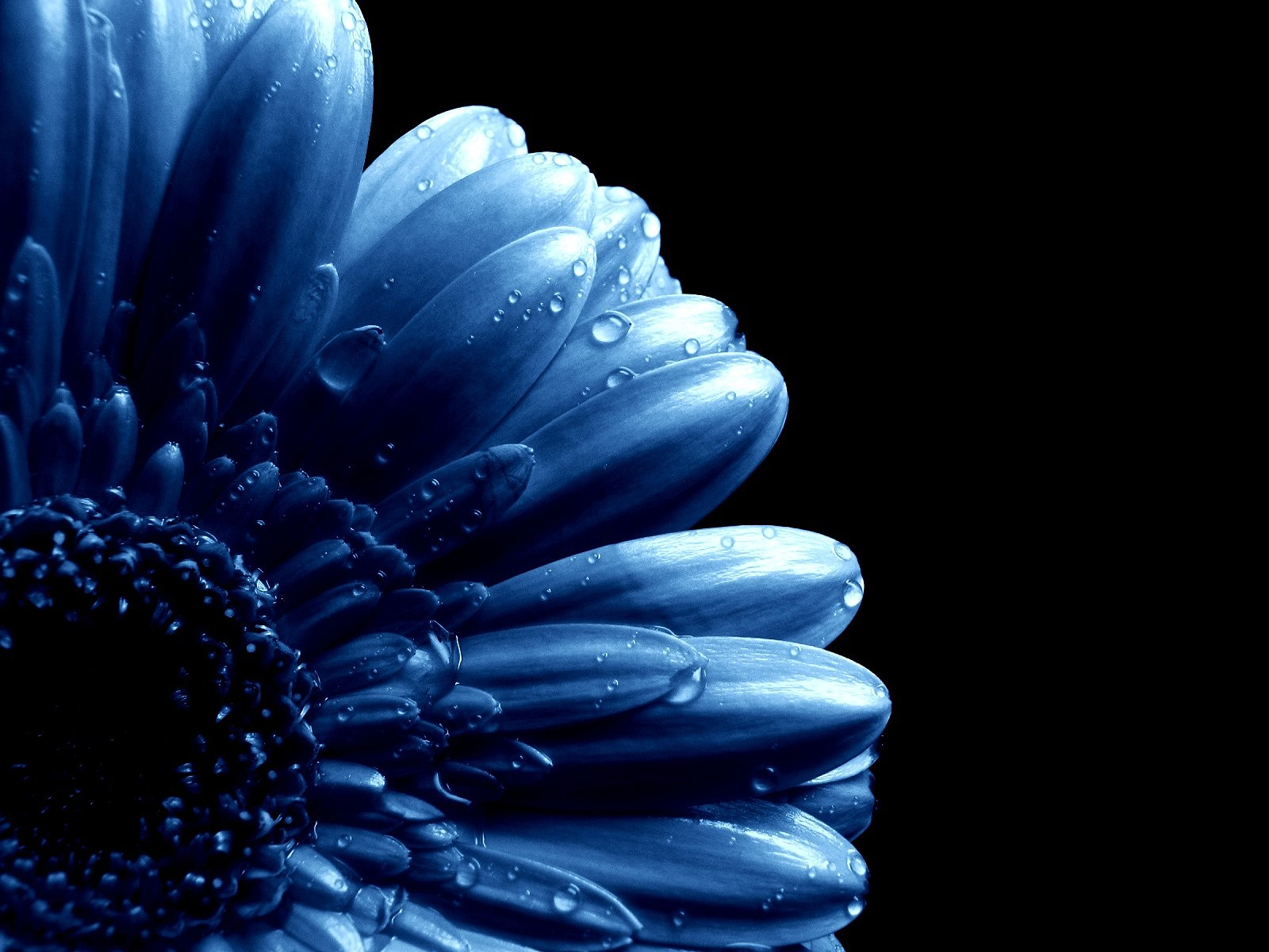 Blue flowers available in october 12 hd wallpaper blue flowers available in october 12 hd wallpaper dhlflorist Images