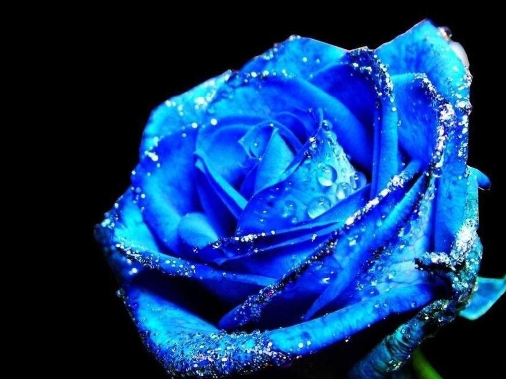 Blue Flowers Lyrics 6 Widescreen Wallpaper Hdflowerwallpaper