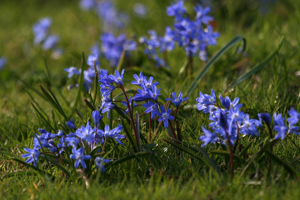 Blue Flower Names 28 Images Pictures Of Blue Flowers And Their Names Www Pixshark Com