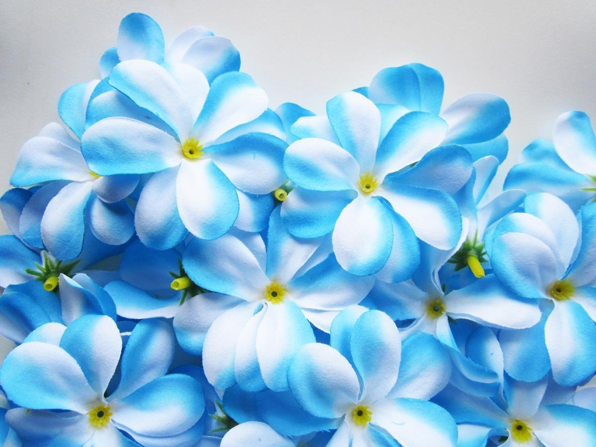 Beautiful Blue Flowers On White Background Round Designs