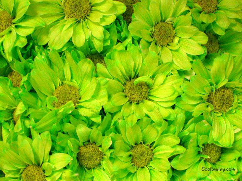 Green Flowers Names 14 Widescreen Wallpaper ...
