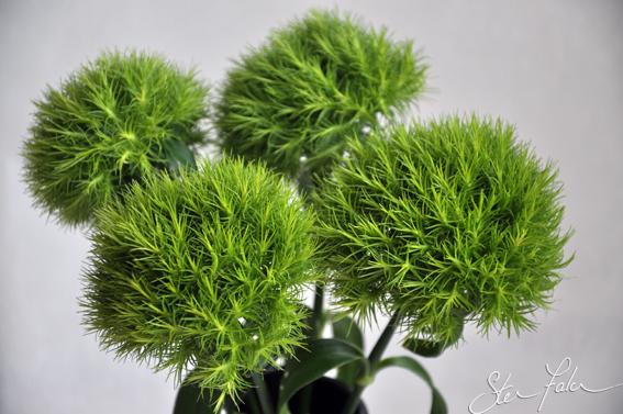 Green Flowers Names 2 Widescreen Wallpaper ...