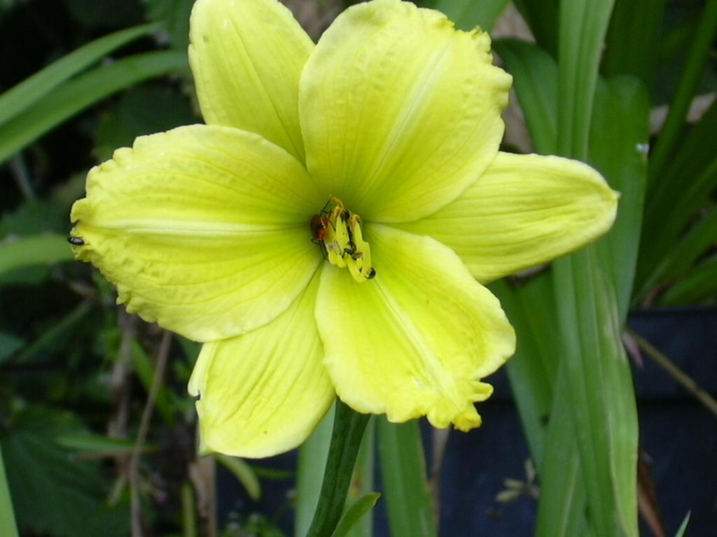 Green flowers names 8 widescreen wallpaper hdflowerwallpaper green flowers names free wallpaper mightylinksfo