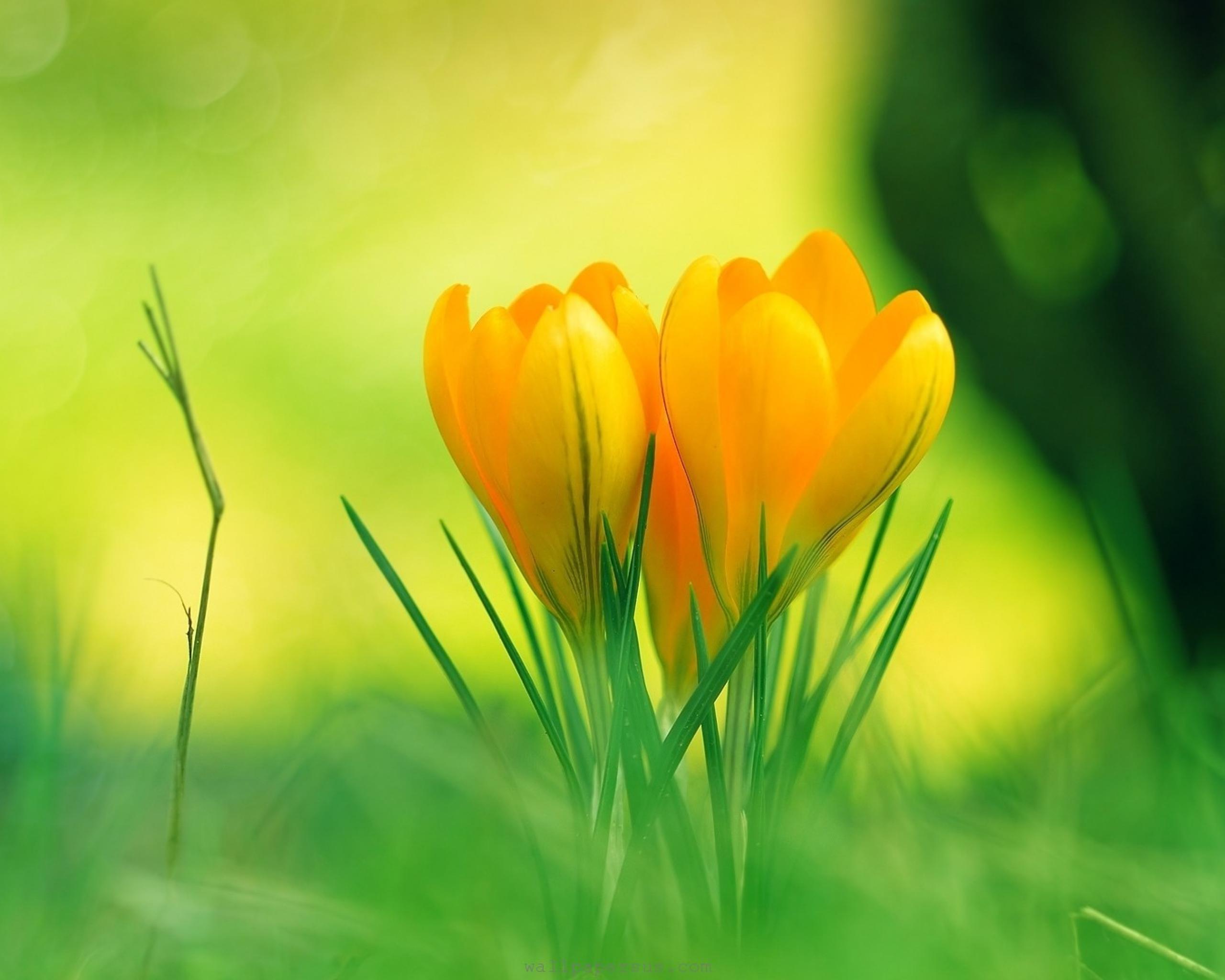 Green Flowers Natural Free Wallpaper